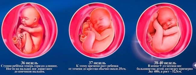 Ребенок на 36 недели 100